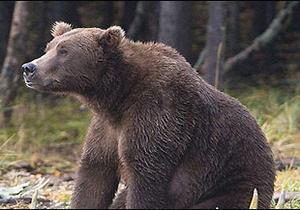 У США ведмедиця грізлі вбила чоловіка