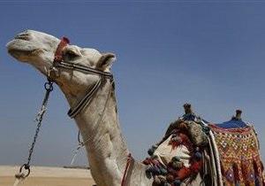 На окраине Харькова обнаружили беспризорного верблюда