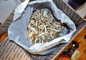Псилоцибин - В США в редакцию газеты прислали ящик с галлюциногенными грибами