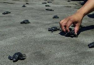 Власти Сальвадора сообщают о массовой гибели морских черепах