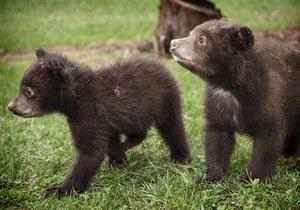 Новости России - новости о животных: В России спасли гималайского медвежонка, застрявшего головой в бидоне