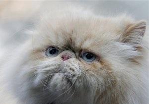 Новости России: Сбросившего кошку с балкона челябинца оштрафовали на 10 тысяч рублей