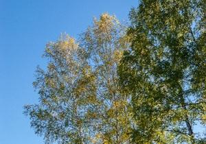 прогноз погоды - Бабье лето начнется в Украине с понедельника