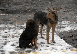 На Донбассе выпал снег