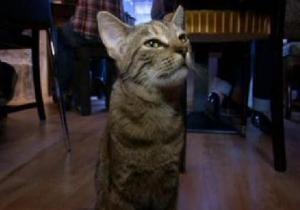 В Париже открылось кафе с кошками
