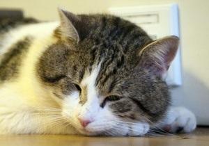 Новости СШАм - В США признали виновным мужчину, водившего в нетрезвом виде, чтобы  спасти кота