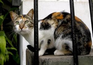Кошки - Защитники животных в Перу призывают не есть кошек