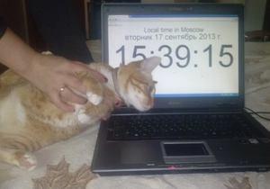 У жительницы Москвы похитили кота по кличке Навальный и требуют выкуп