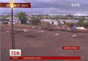 В Днепропетровске предприниматель обустроил свиноферму посреди города