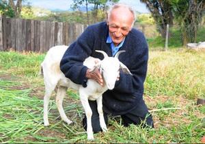 Новости Бразилии - странные новости: Бразилец решил жениться на своей козе