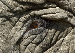 В Танзании слон растоптал американского туриста