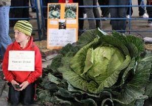 Новости США - странные новости: Десятилетний житель Аляски вырастил 42-килограммовую капусту