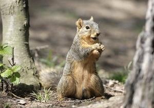 Новости Швеции - новости о животных - странные новости: В Швеции белка спровоцировала ДТП