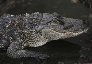 Новозеландец две недели спасался от крокодила