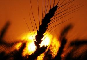 Українські фермери, стривожені збитками через рекордний врожай, вимагають втручання Кабміну - Ъ - сільське господарство - зернові - урожай 2013