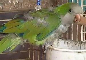 Новости США - новости о животных: В США попугай предотвратил ограбление соседского дома
