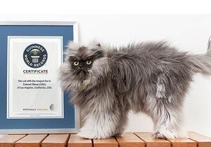Новости о животных - Книга рекордов Гиннесса: Кот Полковник Мяу внесен в Книгу рекордов Гиннесса как обладатель самой длинной шерсти