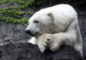 Новости США: Умер символ нью-йоркского зоопарка медведь Гус