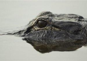 Новости России - новости о животных: В Екатеринбурге разыскивают беглого крокодила