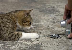 Британська поліція буде шукати злочинців за допомогою ДНК котів