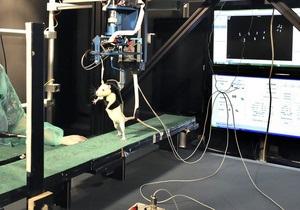 Новини науки - потойбічні видіння - клінічна смерть: Вчені простежили за вмиранням щурів