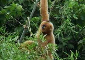Життя в джунглях
