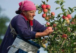 DW: На польський урожай бракує  українських рук