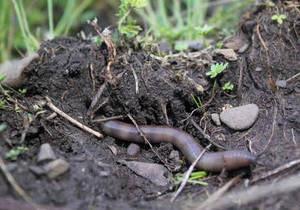 Учені виявили користь переляканих черв яків для рослин