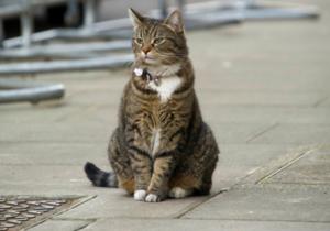Кішка міністра фінансів Британії