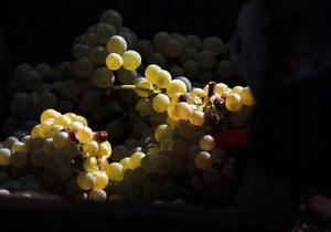 Виноробство - Французи  імпортували  мистецтво виноробства з Італії