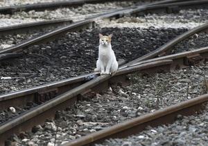На двух поездах между Россией и Украиной появится услуга электронной регистрации пассажиров - москва киев - москва симферополь