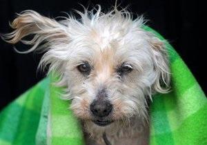 Новини науки: Учені переглянули спосіб розрахунку віку собак