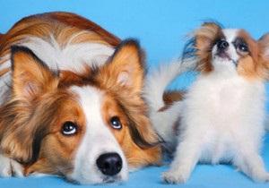 ВВС: Як вирахувати вік собаки в людських роках?