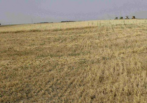 Агротон - Fitch понизило рейтинги великої української аграрної групи