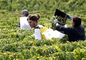Виноградники - Бордо - Рона - зникнення - 2050 рік