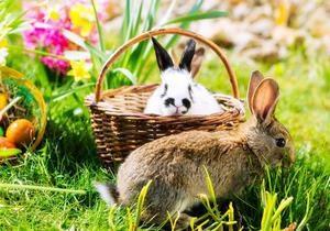 DW: Чому символом Великодня для німців став заєць