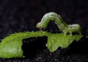 Новини науки - генетика: У США успішно виростили трансгенну рослину