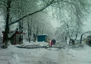 В Івано-Франківську дерево пошкодило п ять автомобілів
