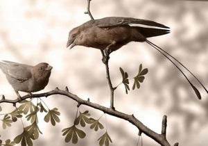 Палеонтологи зуміли визначити стать викопних птахів