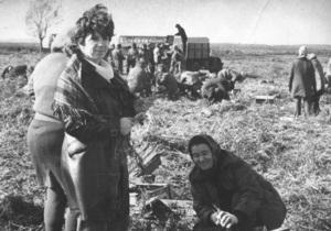 Корреспондент: По колгоспах шикуйсь. Протягом двох десятиліть радянська інтелігенція разом із селянами билася за врожай