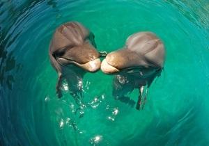 Дельфіни не припиняють сканувати водний простір навіть уві сні
