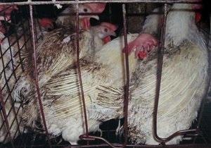 В Ірані можуть ввести заборону на показ курятини по телевізору
