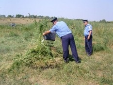 У Луганській області міліція виявила пенсіонера, який виростив поле конопель