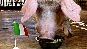 BBC: Німецькі захисники обурені використанням тварин-віщунів під час Євро-2012
