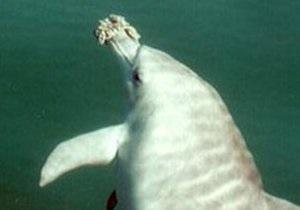 У Феодосії відкриють дельфінарій