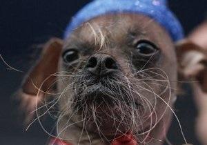 У США обрали найпотворнішого собаку в світі