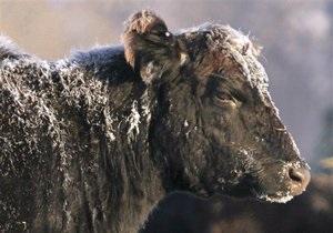 Держветфітослужба заявила про зниження вартості ідентифікації тварин