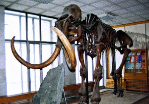 Учені вважають, що люди не вплинули на вимирання мамонтів