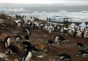 У Лондоні опублікували дослідження 100-річної давності про пінгвінів-некрофілів