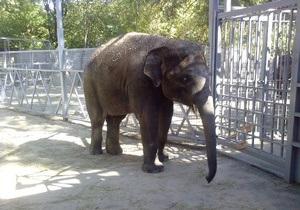 У Київському зоопарку з явиться слон з Ростова-на-Дону
